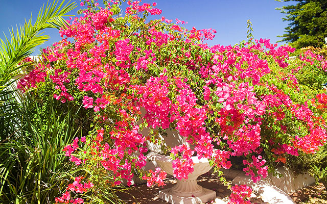 Njut av blomsterprakt i stellenbosch under longstay sydafrika | Sunbirdie
