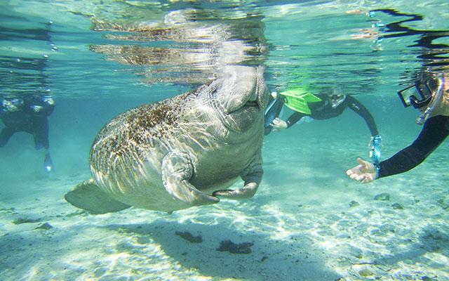 Nyt dykking under ditt Longstay Florida med Sunbirdie